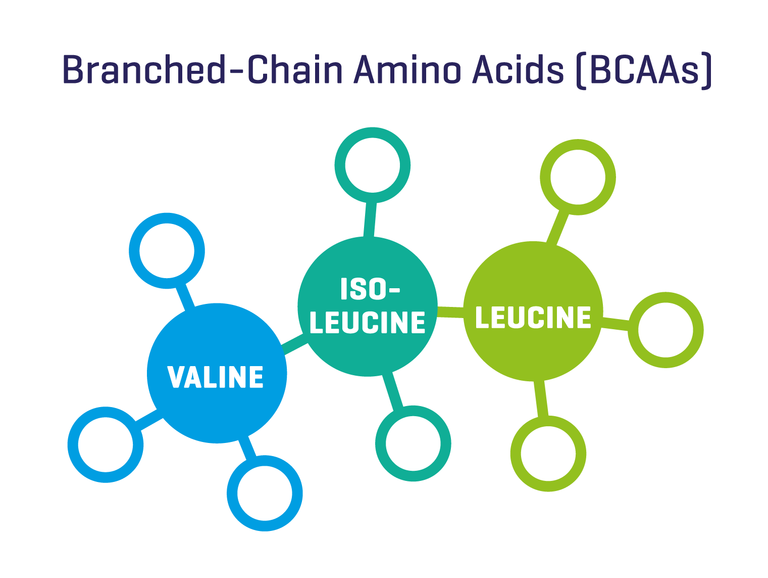 Branched-Chain Amino Acids BCAA
